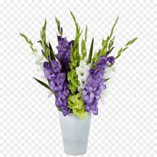 gladiolus bulb hirts gardens flower flowering plant png