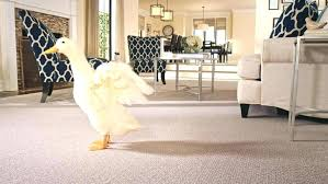 pet proof area rugs large size of throw friendly carpet best for pets owners flooring delectable