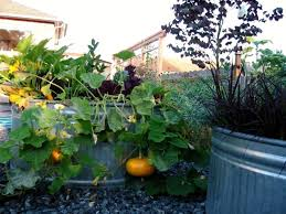 Kitchen Garden Trough Kitchen Garden Trough Stone Kitchen Garden Trough Planter Ideas