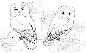 Owls Coloring Pages Great Horned Owl Coloring Page Coloring Pages Of