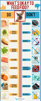 What Can Dogs Eat Chart What People Food Can Dogs Eat An Infographic Petcarerx