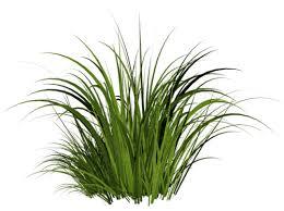grass transparent background. Grass Grass Transparent Background