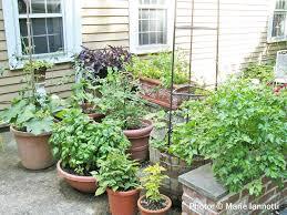 container garden vegetables. Container Garden Vegetables E