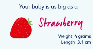 Diet Chart For 6 Week Pregnancy 10 Weeks Pregnant Your Pregnancy Week By Week Bounty