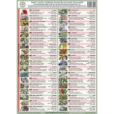 Bach Flower Remedies Chart First Light Laminated A4 Chart