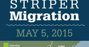 Tight Lined Tales Of A Fly Fisherman Striper Migration Map