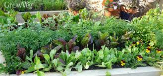 Crop Rotation Chart Vegetable Gardening Crop Rotation For Growing Vegetables