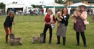 CHAMPIONSHIP SHOW - Cairn Terrier 2019