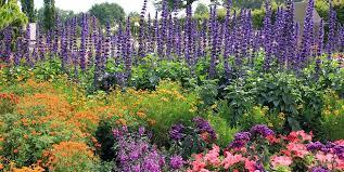 flower garden design. Flowers, Garden, Purple Spires Garden Design Calimesa, CA Flower