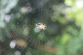 How To Make A Giant Spider Web Spider Web Wikipedia
