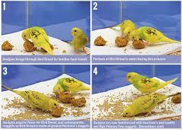 Diet Conversion Small Bird Harrisons Bird Foods