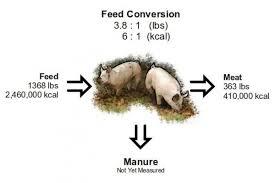 Pig Efficiency Flow Chart Pig Farming Livestock Farming