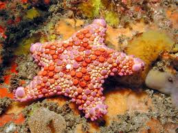 best star fish images under the sea stars and biscuit star fish