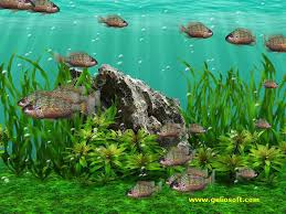 freshwater wallpaper. Plain Freshwater 3D Screensaver And Wallpaper With Oreochromis Tanganicae Fish And Freshwater E