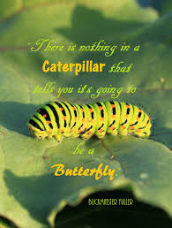 Butterfly Quotes Custom Butterfly Success Quotes Managementdynamics