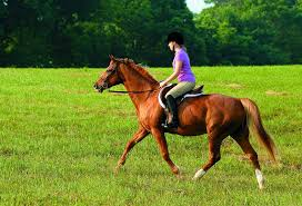 Work Level And Feeding Horses The Horse
