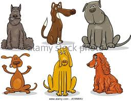 Small Picture Pointer Mongrel Stock Photos Pointer Mongrel Stock Images Alamy