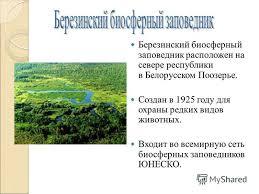 Презентация на тему Национальные парки и заповедники Беларуси  4 Березинский биосферный заповедник