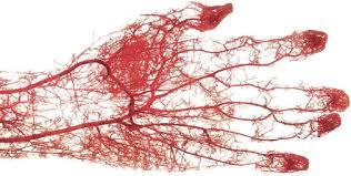 「毛細血管採血」の画像検索結果