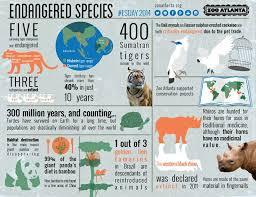 essay about animals endangered essay service essay about animals endangered