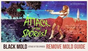 what to use to kill mold. Brilliant Mold Remove Black Mold Throughout What To Use Kill Mold D