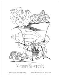 Small Picture Crab Wordsearch Vocabulary Crossword and More