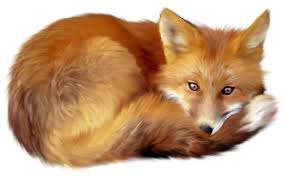 Image result for fox clipart free
