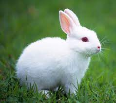 White Rabbit Wallpapers - Top Free ...