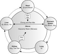 Female Menstrual Cycle Flow Chart Menstruation An Overview Sciencedirect Topics