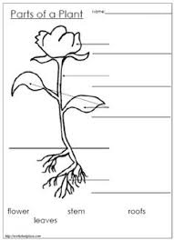 Small Picture lable a flower worksheet flowers are flowering longitudinal
