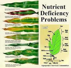 Nutrient Deficiency Chart Creativedotmedia Info