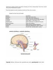 Fetal Circulation Chart Exercise 32 Blood Vessels Veins Exercise 32 About Blood Vessels When You