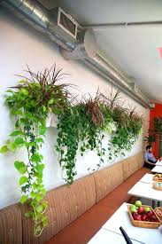 office planter boxes. Wall Mount Planter An Office With Mounted Planters And Trailing Decorative Plants Including Neon Diy Box Boxes E