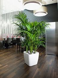 Providing A Range Of Indoor Plants Including Office And  House For Sale Pinterest
