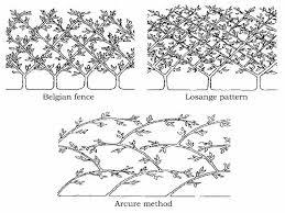 Fruit Tree Shapes
