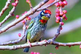 top wild bird photographs of the week national geographic antero topp srinivas popuri