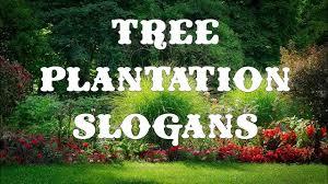 Tree Plantation Slogans
