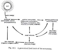 patterns of flow of energy through the ecosystems essay