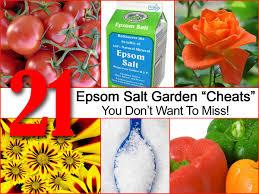 epsom salt gardening. Fine Gardening In Epsom Salt Gardening