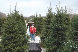 Local Christmas Trees Available From Delaware Farms  Cape GazetteLocal Christmas Tree Lots