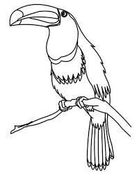 Small Picture Toucan Bird Coloring Page Toucan Bird Coloring Page Coloring Sun