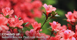 auburn azalea festival