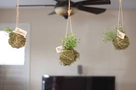 Hanging Herb Garden Kitchen Beautiful Indoor Plant Decoration Ideas For Hall Kitchen Bedroom