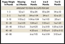 Rottweiler Puppy Diet Chart Puppy Feeding Chart Feeding Puppy Puppy Feeding Schedule
