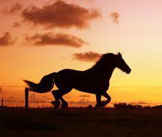 horses running in the sunset.  Horses Horse Inside Horses Running In The Sunset O