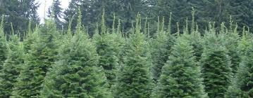 Here at Snow Mountain Tree Farms we grow are own christmas trees in the  beautiful mountains of Oregon, as growers we are able to provide you with  premium ...