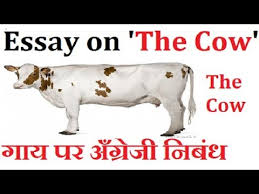 lines essay on the cow in english  10 lines essay on the cow in english