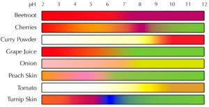 Red Cabbage Juice Indicator Chart Natural Indicators Around Us Introduction Experiment