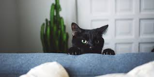 Why Cats Scratch Furniture How to Stop Cats From Scratching