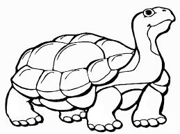 Animali Tartarughe Az Colorare